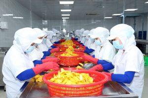 công nhân đang tách từng miếng xoài sấy tại nhà máy Lương Gia