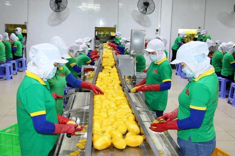 công nhân gọt xoài tại nhà máy Lương Gia Food